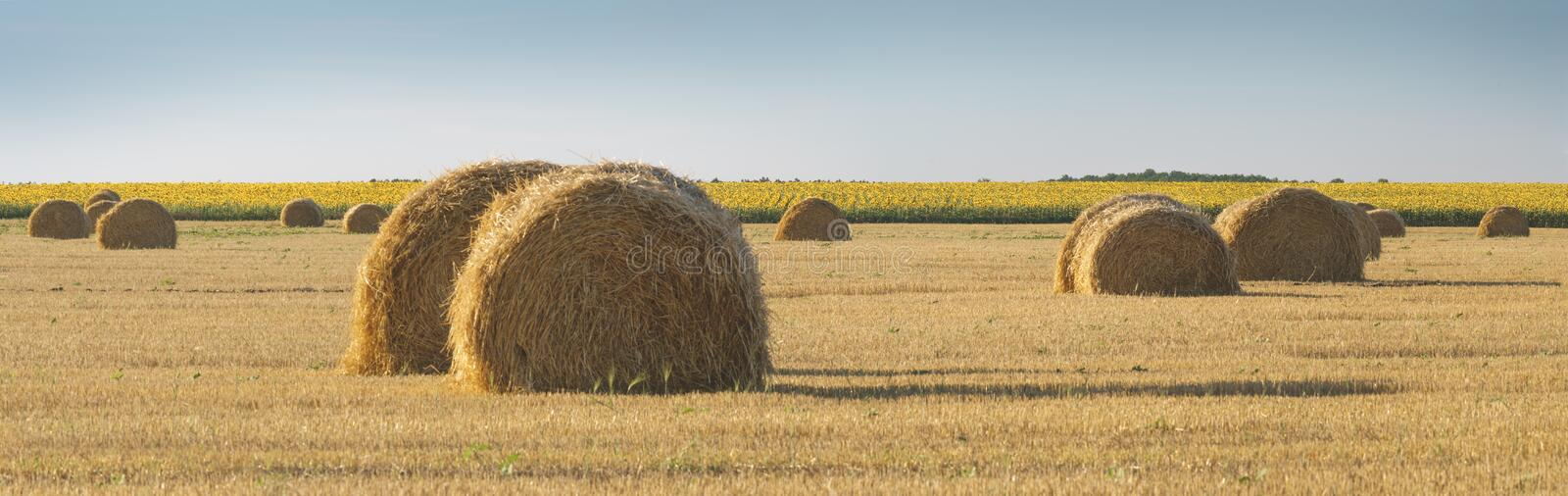 Panoramic view of field with wheat straw, hay bales and sky, rural landscape in the agriculture farm land. stock image