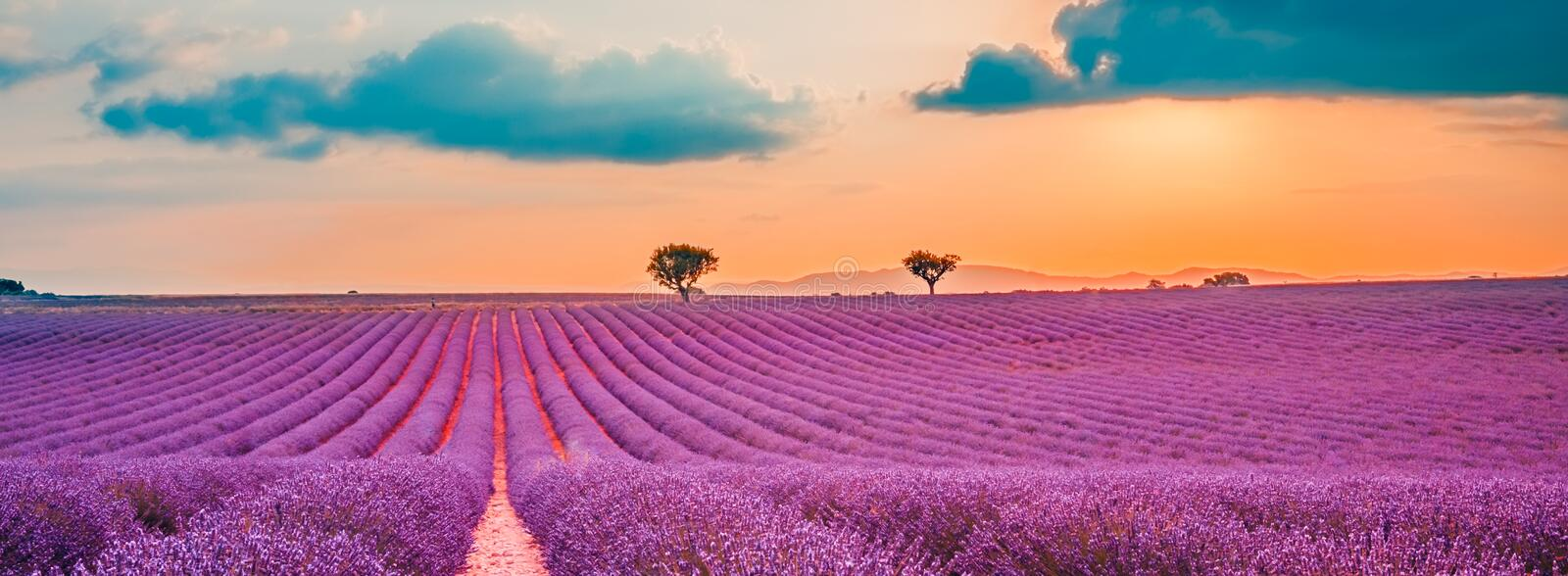 Beautiful landscape. Panorama lavender field summer sunset landscape near Valensole. Provence, France. Panoramic view of French lavender field at sunset. Sunset stock photography