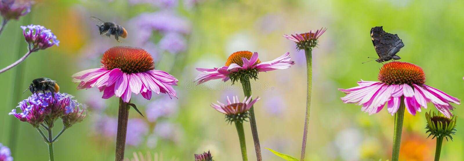 Garden flowers and butterfly and bumblebees close up. The panoramic view - garden flowers and butterfly and bumblebees close up stock images