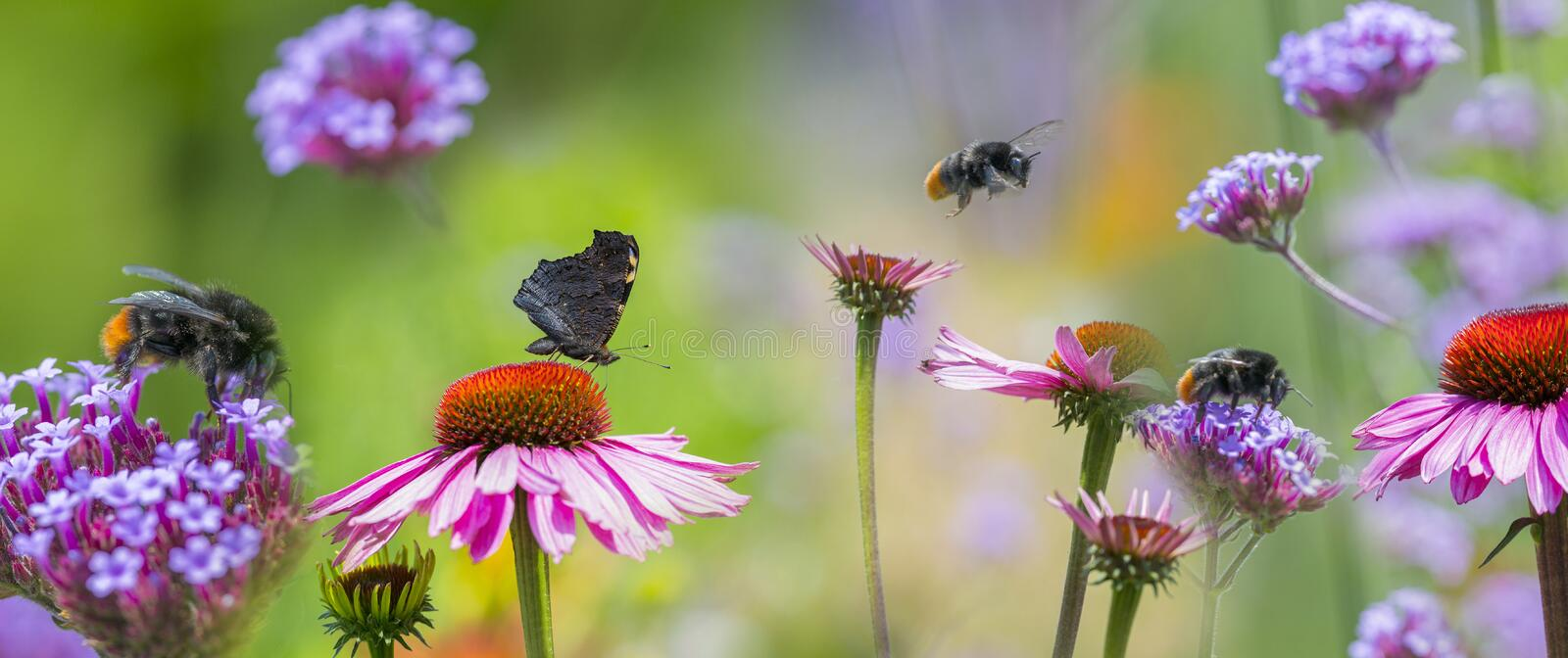 Garden flowers and butterfly and bumblebees close up. The panoramic view - garden flowers and butterfly and bumblebees close up royalty free stock photos