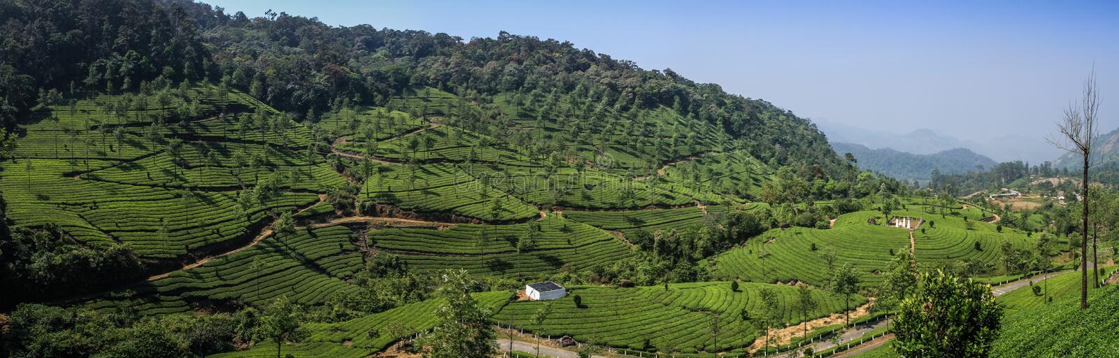 Panoramic view of the green lush tea hills and mountains around Munnar, Kerala, India royalty free stock photo