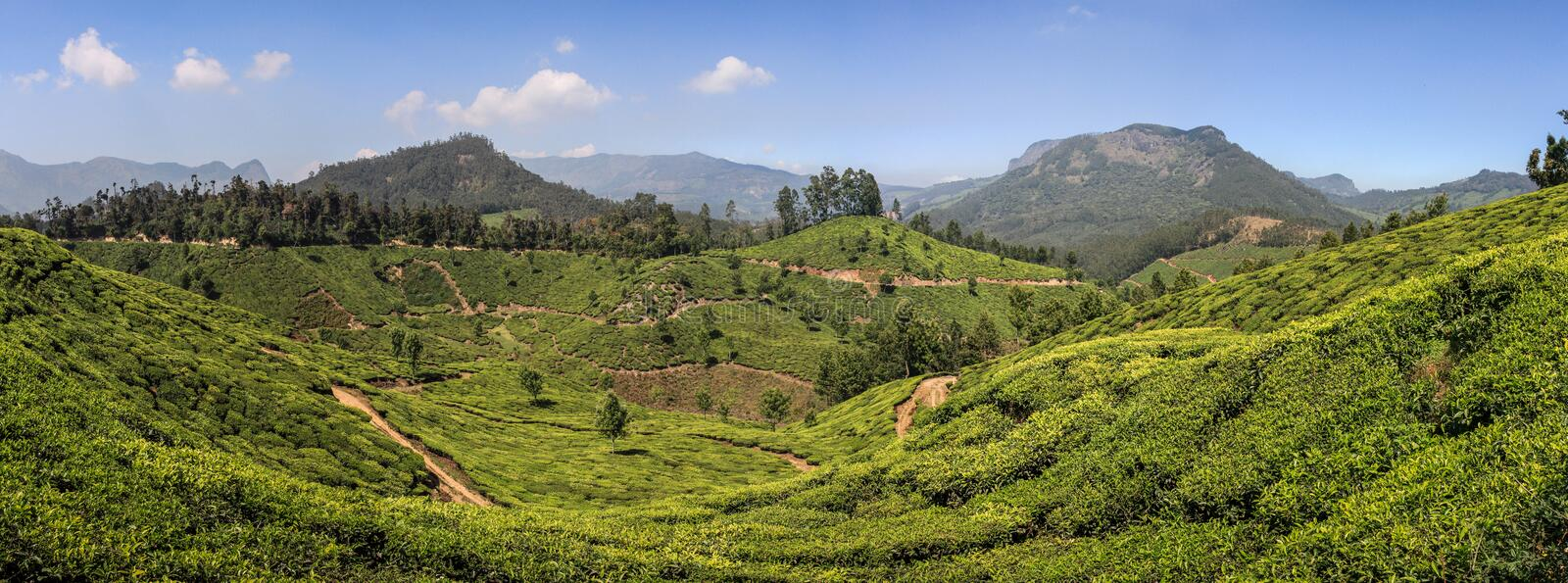 Panoramic view of the green lush tea hills and mountains around Munnar, Kerala, India. Munnar is a town and hill station located in the Idukki district of the stock images
