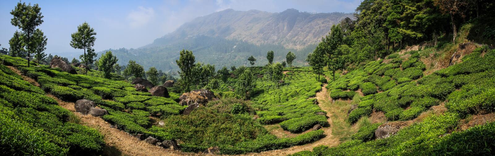 Panoramic view of the green lush tea hills and mountains around Munnar, Kerala, India. Munnar is a town and hill station located in the Idukki district of the stock photo
