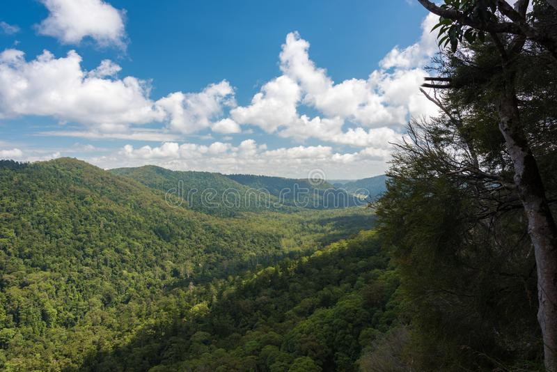 Panoramic view of green tropical forest on sunny day stock image