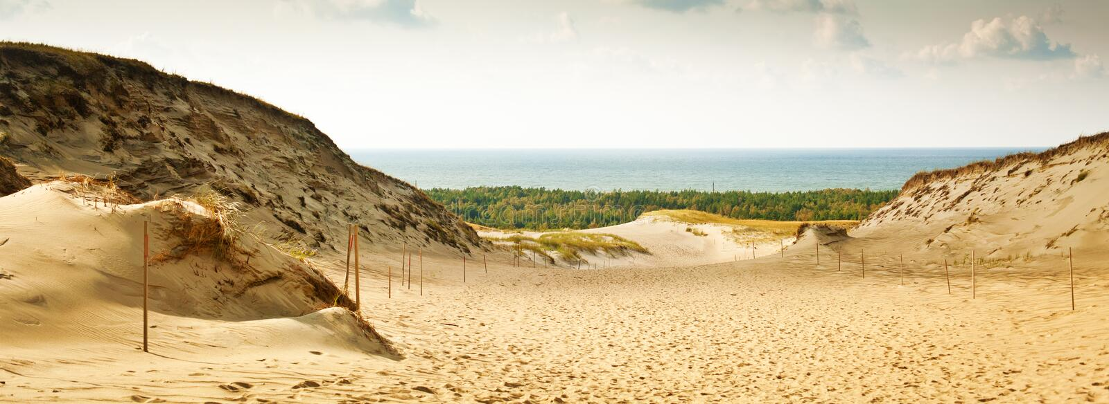Panoramic View of the Grey Dunes at the Curonian Spit. In Nida, Neringa, Lithuania royalty free stock photography