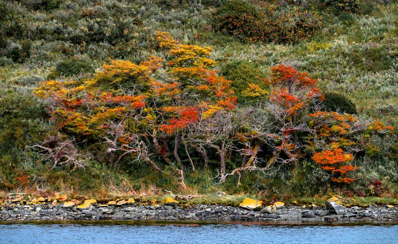 Panoramic view of magical colorful fairytale forest at Tierra del Fuego National Park, Beagle Channel, Patagonia, Argentina royalty free stock images