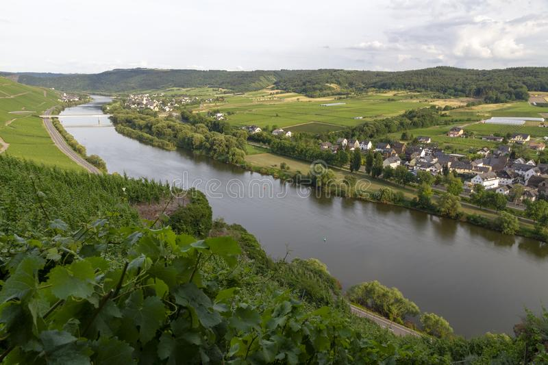 Panoramic view of Moselle Valley in Germany. Vineyards and river Mosel in summer. Image stock images