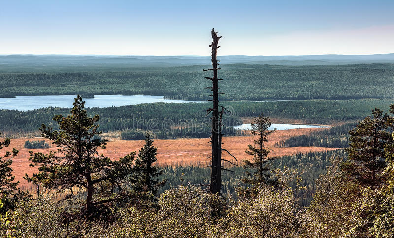 Panoramic View From The Mountain Top Vottovaara. Panoramic view from the top of the Vottovaara mountain in Karelia on remote forests, rivers and lakes royalty free stock photography