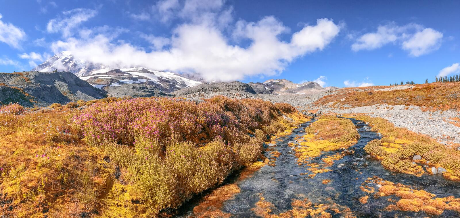 Panoramic view of Mt Rainier creek and glacier on a beautiful au stock image
