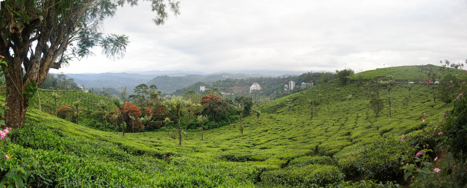 Panoramic view in Munnar in western Ghats, Kerala stock image
