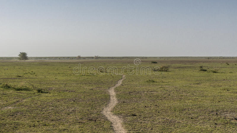 Panoramic view of National Park Lake Manyara royalty free stock image