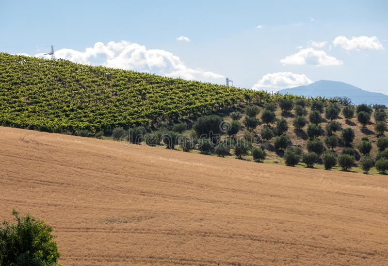 Panoramic view of olive groves, vineyards and farms on rolling hills of Abruzzo. royalty free stock photos