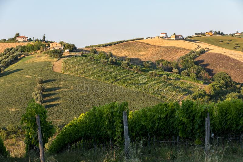 Panoramic view of olive groves, vineyards and farms on rolling hills of Abruzzo. royalty free stock photography