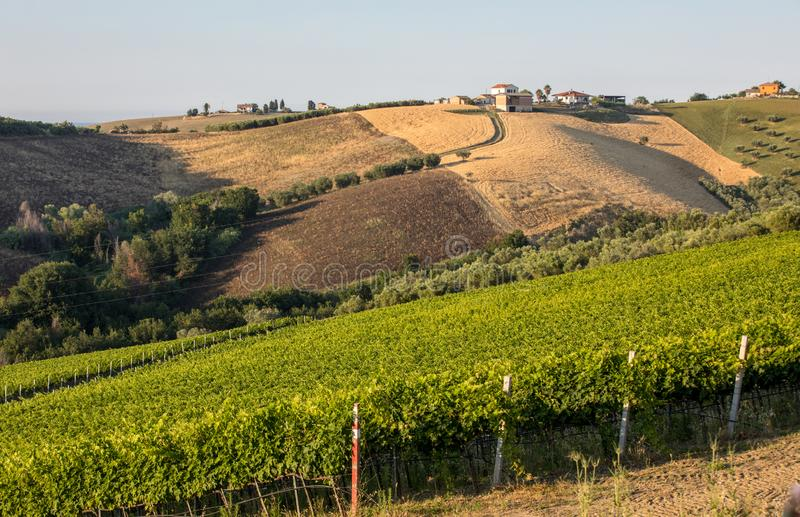 Panoramic view of olive groves, vineyards and farms on rolling hills of Abruzzo. stock image