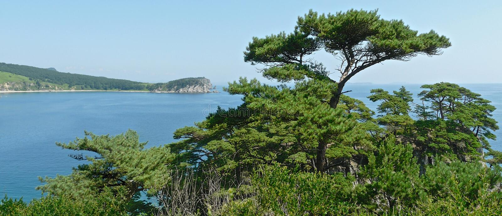 Panoramic view of pines on the coastal cliffs on the blue bay royalty free stock photo