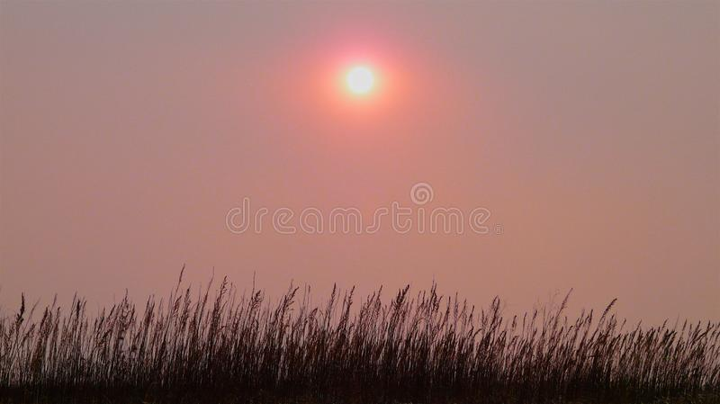 Panoramic view of the pink sky and the sun in the fog above dry autumn grass stock images