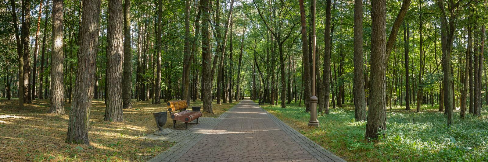 Panoramic view of the public city park with a bench on the edge of a neat shady alley lined with tall trees. Beautiful panoramic view of the public city park royalty free stock photos