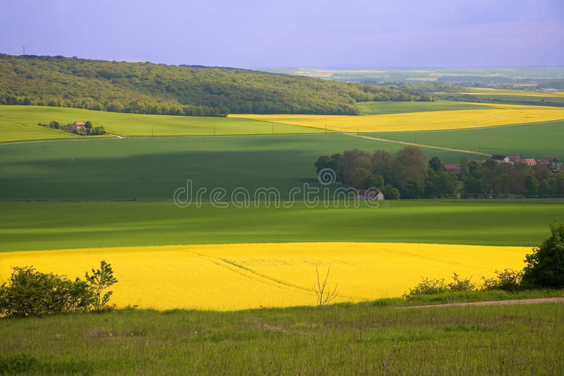 Panoramic view of rapeseed field royalty free stock images