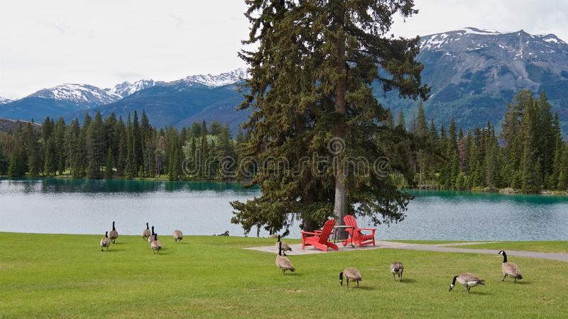 Panoramic view of red chairs and wild geese on a green field on the clean blue lake shore royalty free stock photo