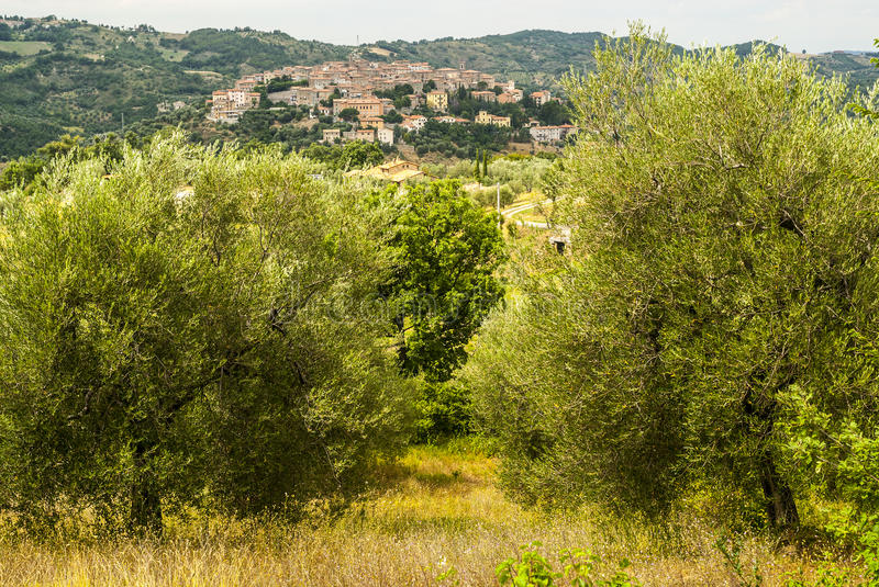Download Panoramic View Of Seggiano, In Tuscany Stock Image - Image: 30222111