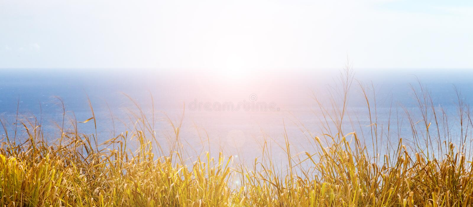 Panoramic view of sunset over the blue ocean horizon. With golden grass along the coast stock photos