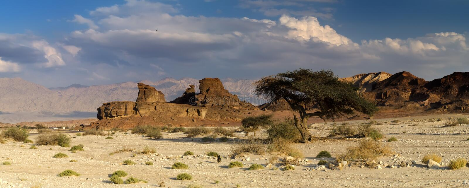 Panoramic view of Timna park, Eilat, Israel stock images