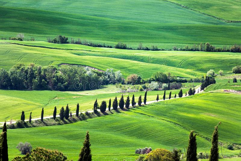 Panoramic view of typical tuscany countryside with cypress and meadow, Siena province, Italy royalty free stock photos