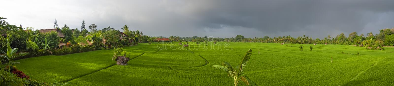 Panoramic View of an Ubud, Bali, Rice Field Before a Rain Storm. royalty free stock photo