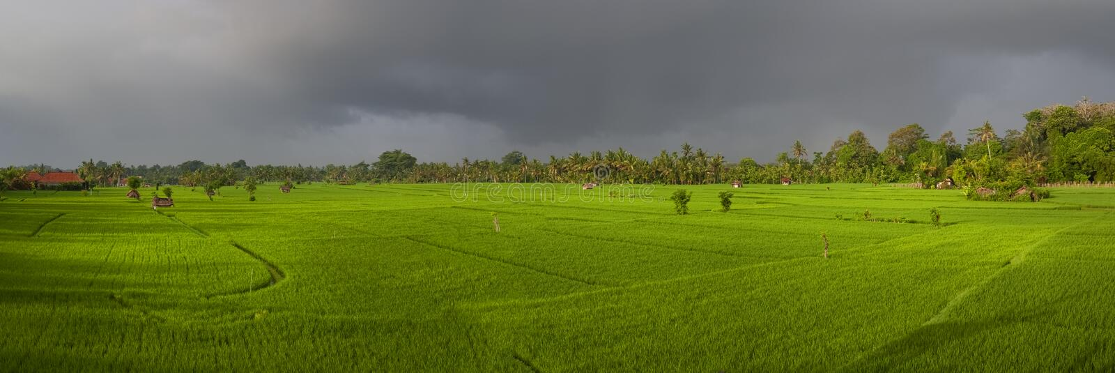 Panoramic View of an Ubud, Bali, Rice Field Before a Rain Storm. royalty free stock photos