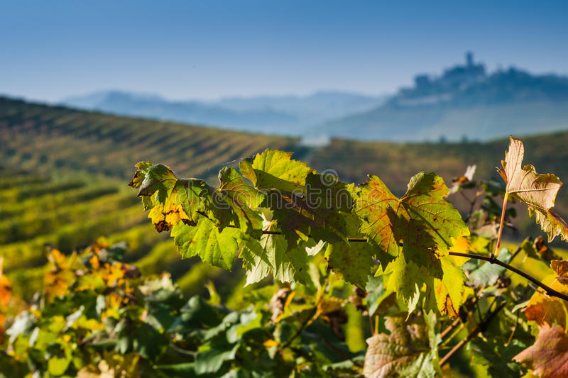 Panoramic view of a vineyard in Langhe region during autumn royalty free stock photos