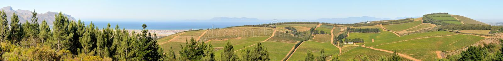 Panoramic view of vineyards near Sir Lowreys Pass royalty free stock images