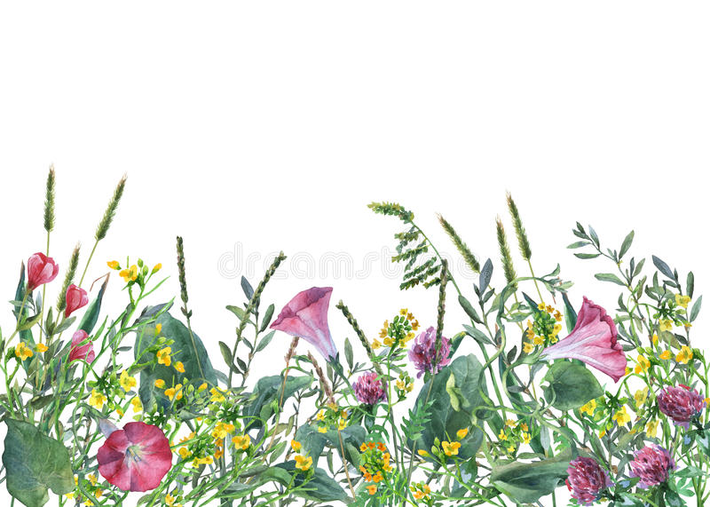 Panoramic view of wild meadow flowers and grass on white background. royalty free illustration