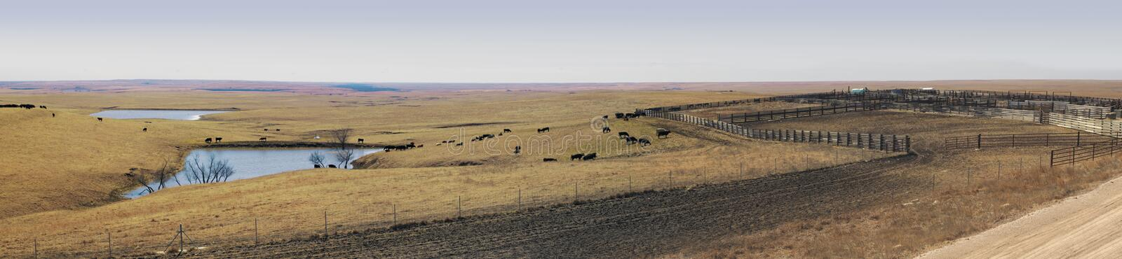 Panoramic Vista of great plains ranching. Prairie life shown with cattle grazing, several small ponds, muddy tracks, and cattle pens. Site for loading cattle royalty free stock image