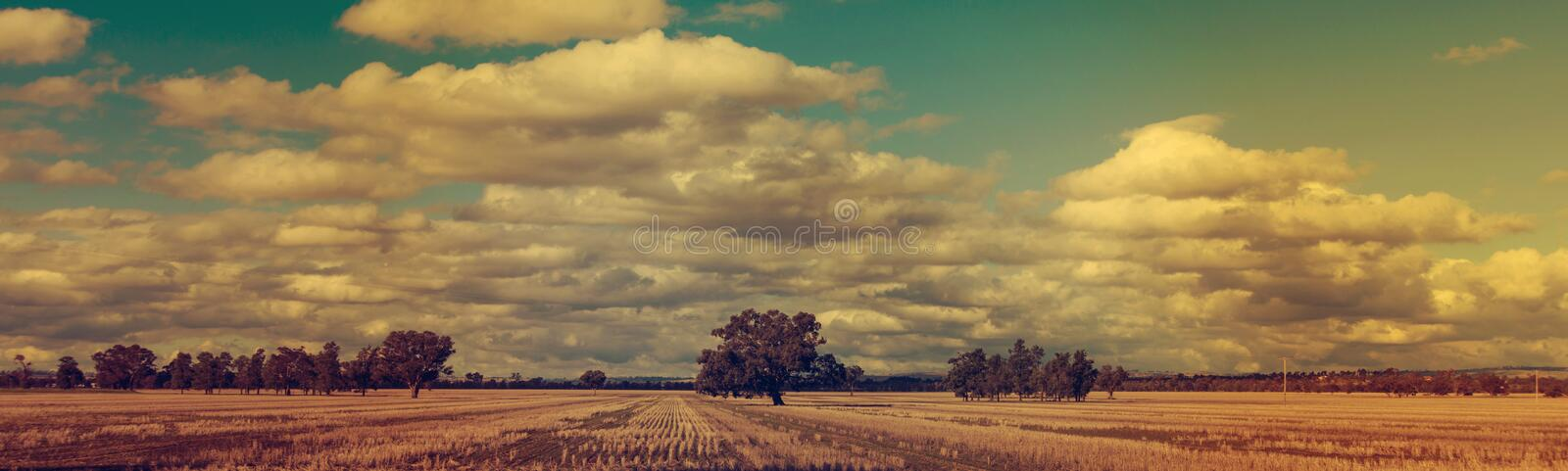 Panoramic winter sunset wheat fields royalty free stock images