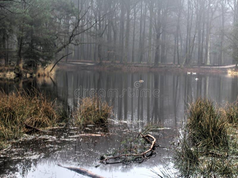 Panoramica del lago in autunno immagini stock libere da diritti
