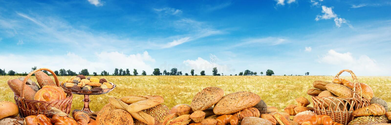 Panoramiczna fotografia świeżo piec chleby na tła pszenicznym polu fotografia royalty free