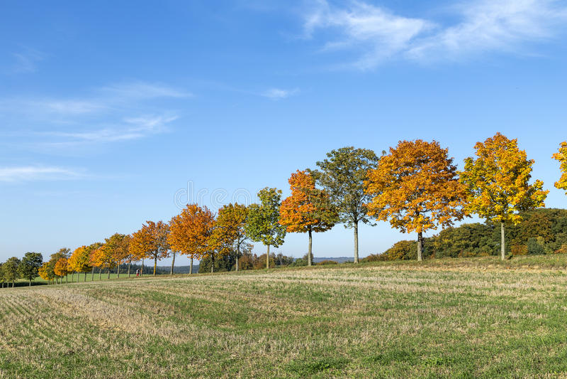 Panoramiczny krajobraz z aleją, polami i lasem, zdjęcie stock