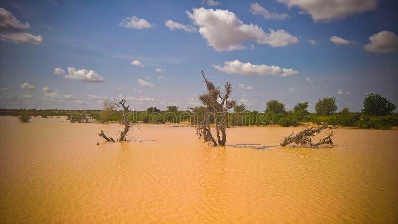 Panoramiczny krajobrazowy widok Sahel Dogon Tabki z zalewającą rzeką i oaza, Dogondoutchi, Niger obraz royalty free