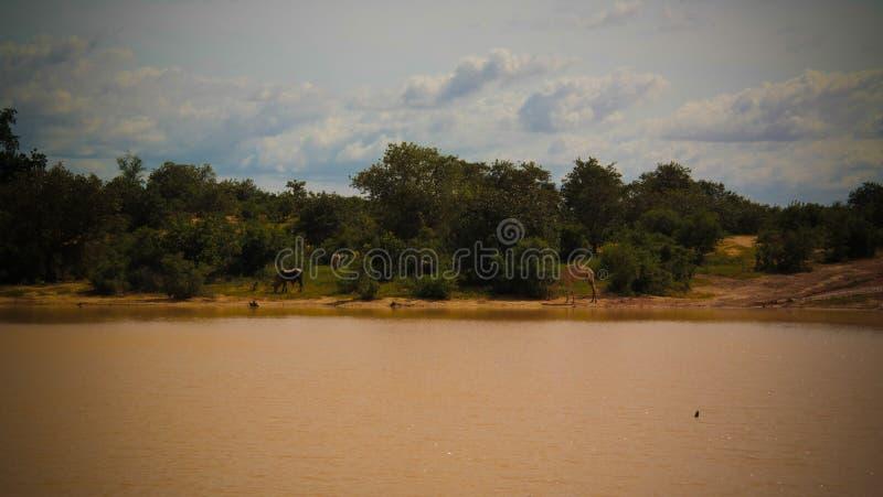 Panoramiczny krajobrazowy widok Sahel Dogon Tabki z zalewającą rzeką i oaza, Dogondoutchi, Niger obraz stock