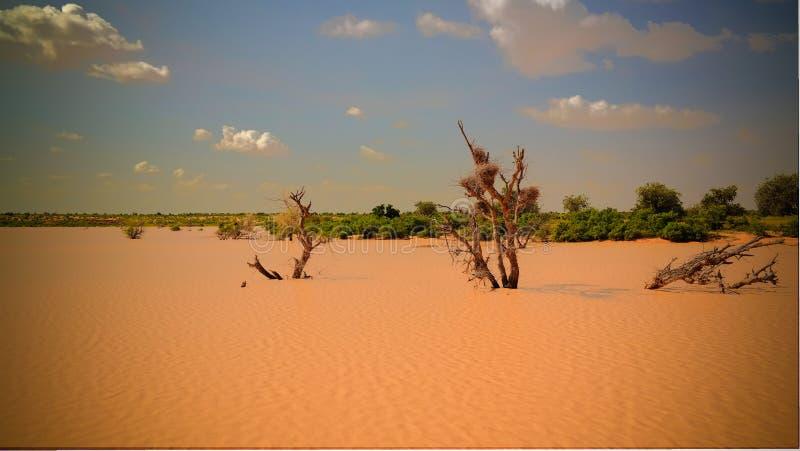Panoramiczny krajobrazowy widok Sahel Dogon Tabki z zalewaj?c? rzek? i oaza, Dogondoutchi, Niger zdjęcie stock