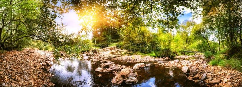 Panoramiczny lato krajobraz z lasowym strumieniem obrazy stock