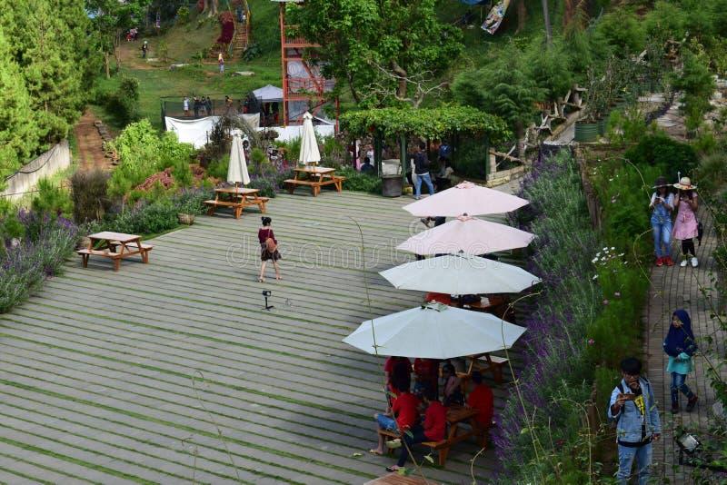 Panoramiczny od ogrodowego kwiatu Bandung Indonesia zdjęcie stock