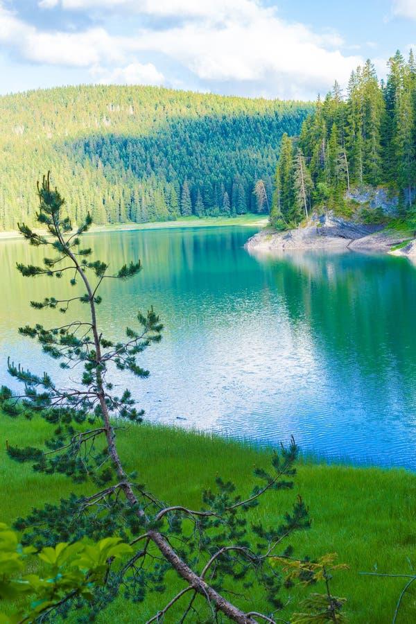 Panoramiczny pocztówka widok piękny Czarny jezioro Durmitor, Montenegro obraz stock