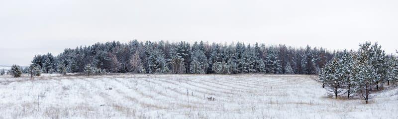 Panoramiczny strzał śnieżysty pole i las w odległości fotografia stock
