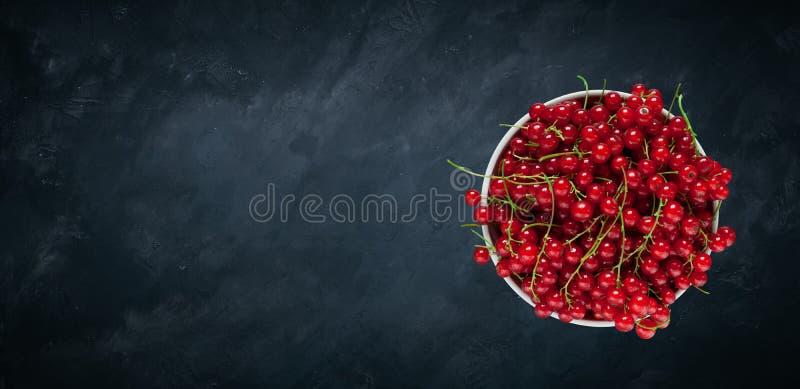 Panoramiczny szablon z Czerwonego rodzynku jagodami dla projekta zdjęcie royalty free