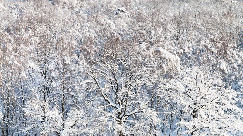panoramiczny widok śnieżyści drewna w zimie zdjęcie stock