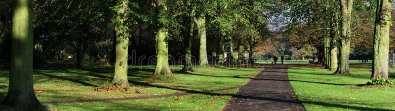 Panoramiczny widok drzewo wykładał spacer na kraj nieruchomości fotografia royalty free