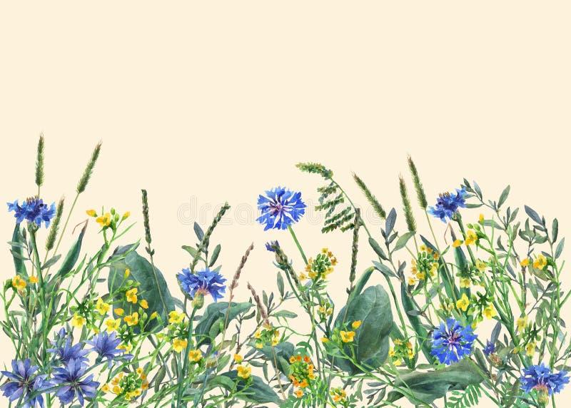 Panoramiczny widok dzicy łąka kwiaty, trawa na żółtym tle i ilustracji