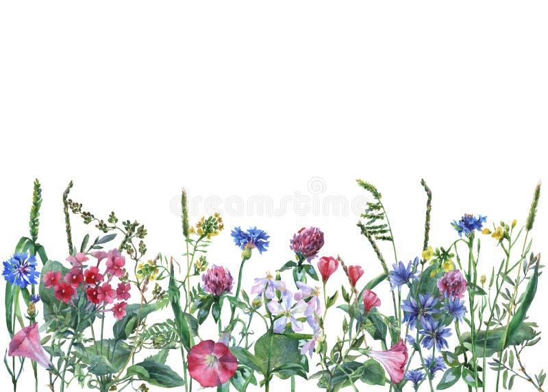 Panoramiczny widok dzicy łąka kwiaty, trawa na białym tle i ilustracji