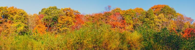 Panoramiczny widok kolorowi drzewni wierzchołki w jesień sezonie fotografia royalty free